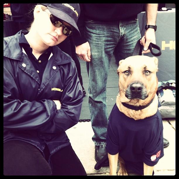 Homeland_dog